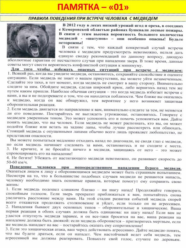 Безопасность при встрече с медведем